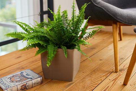 Вазони і кашпо для рослин